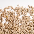 Seeds — Stock Photo #8519712