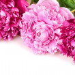 Peonies — Stock Photo #8756214