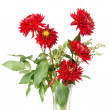 Red dahlias — Stock Photo #8757100