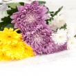 Bouquet of chrysanthemums — Stock Photo #8757466