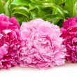 Peonies — Stock Photo #9097444