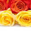 Beautiful Roses — Stock Photo #9097702