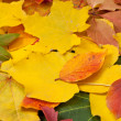 Yellow and red leaves — Stock Photo #9565392