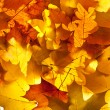 Maple leaves — Stock Photo #9565468