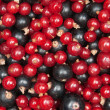 Redcurrant and  blackcurrant - Stock Photo