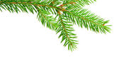 Gren fir — Stock Photo