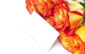 роз, изолированные на белом фоне — Стоковое фото