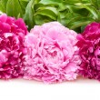 Peonies — Stock Photo #9813088