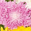 Chrysanthemum — Stock Photo #9813340