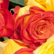 Stock Photo: Red and yellow roses