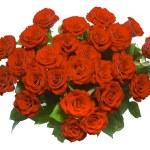Rose — Stock Photo #9545911