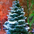 Christmas tree — Stock Photo #9545980