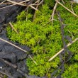Stock Photo: Mossy