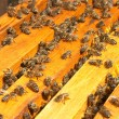 bees — Stock Photo