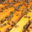 Bees - Stock Photo