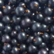 black currant&quot — Stock Photo #9546697