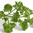 Fresh parsley — Stock Photo #9546716