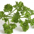 Fresh parsley - Stock Photo