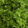 Fresh parsley - Foto Stock