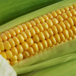 Stock Photo: Corn on Cob
