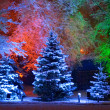 Magic Christmas tree - Foto Stock