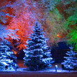Magic Christmas tree - Stockfoto