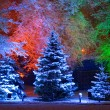 Magic Christmas tree — Stockfoto