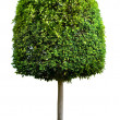 Tree — Stock Photo #9547557