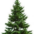 Christmas tree — Stock Photo #9548039