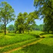 Road under green trees — Stock Photo