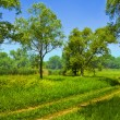 Stock Photo: Road under green trees