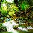 Forest Waterfall - Foto de Stock