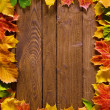 Autumn background — Zdjęcie stockowe #9549925