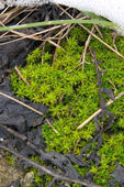 Mossy — Stock Photo