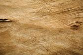 Kabuk dokusu — Stok fotoğraf