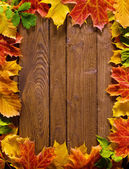 Autumn background — Foto Stock