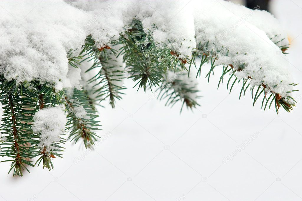 Snowy pine — Stock Photo #9545943