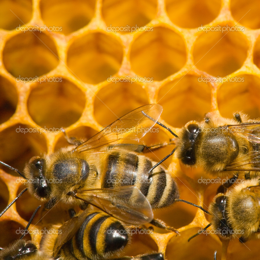 Close up view of the bees on honey — Stock Photo #9548690