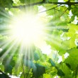 Sun beams — Stock Photo