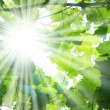 Foto Stock: Sun beams
