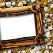 Shell background - Stockfoto