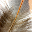 Stock Photo: Feather