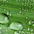 Water drops on fresh green leaf — Stock Photo #9593711