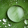 Water drops on fresh green leaf — Stock Photo #9593726