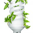 Energy saving lightbulb — Stock Photo