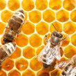 Stock Photo: bees on honeycells