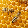 Bees on honeycells — Stockfoto