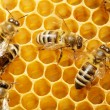 bees on honeycells — Stock Photo #9594766