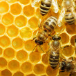 Bees on honeycells — Stock Photo #9594772
