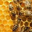Bees on honeycells — Stock Photo #9594780